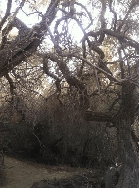 Cruising Area: Dünen von Maspalomas auf Gran Canaria