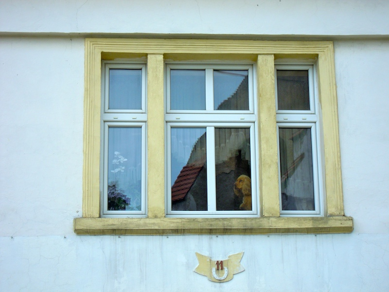 Hund am Fenster in Sobotka