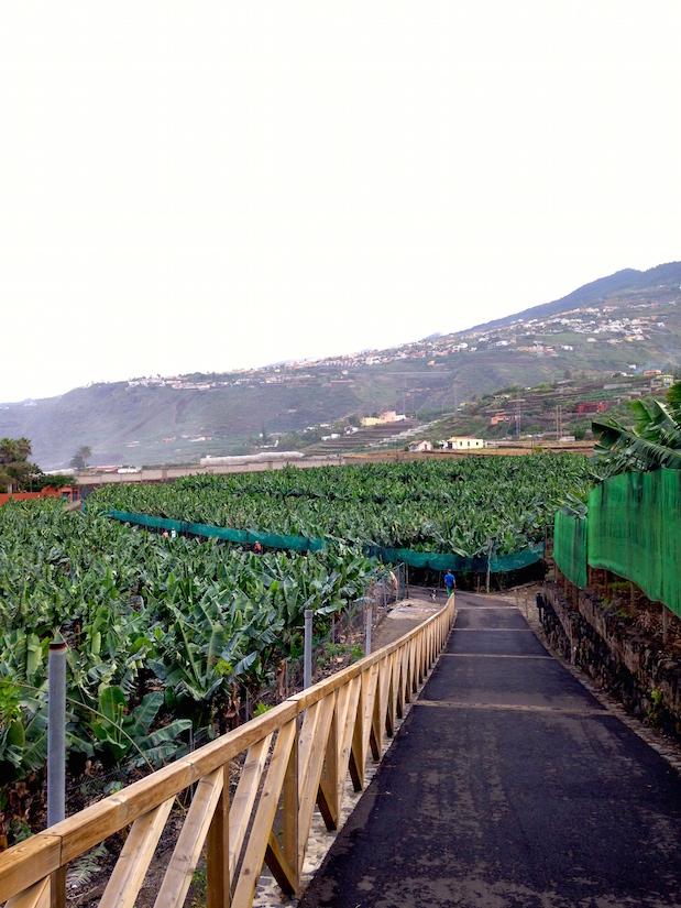 Bananenplantage & Cruising Area in Puerto de la Cruz