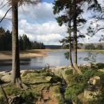 Einfache Harz-Wanderung um den Oderteich