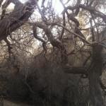 Ab ins Gebüsch: Cruising-Area in den Dünen von Maspalomas
