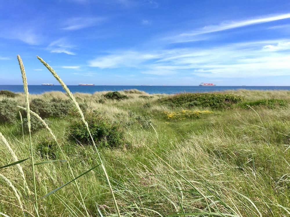 Wunderschöne Dünenlandschaft am Ostseestrand von Grenen