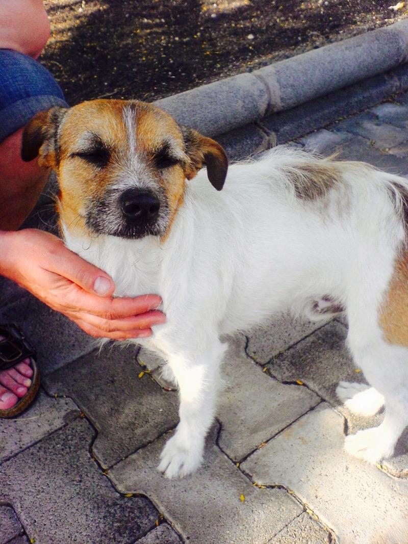 Diesen streunenden Hund haben wir viele Jahre im Urlaub auf Gran Canaria getroffen und liebgewonnen