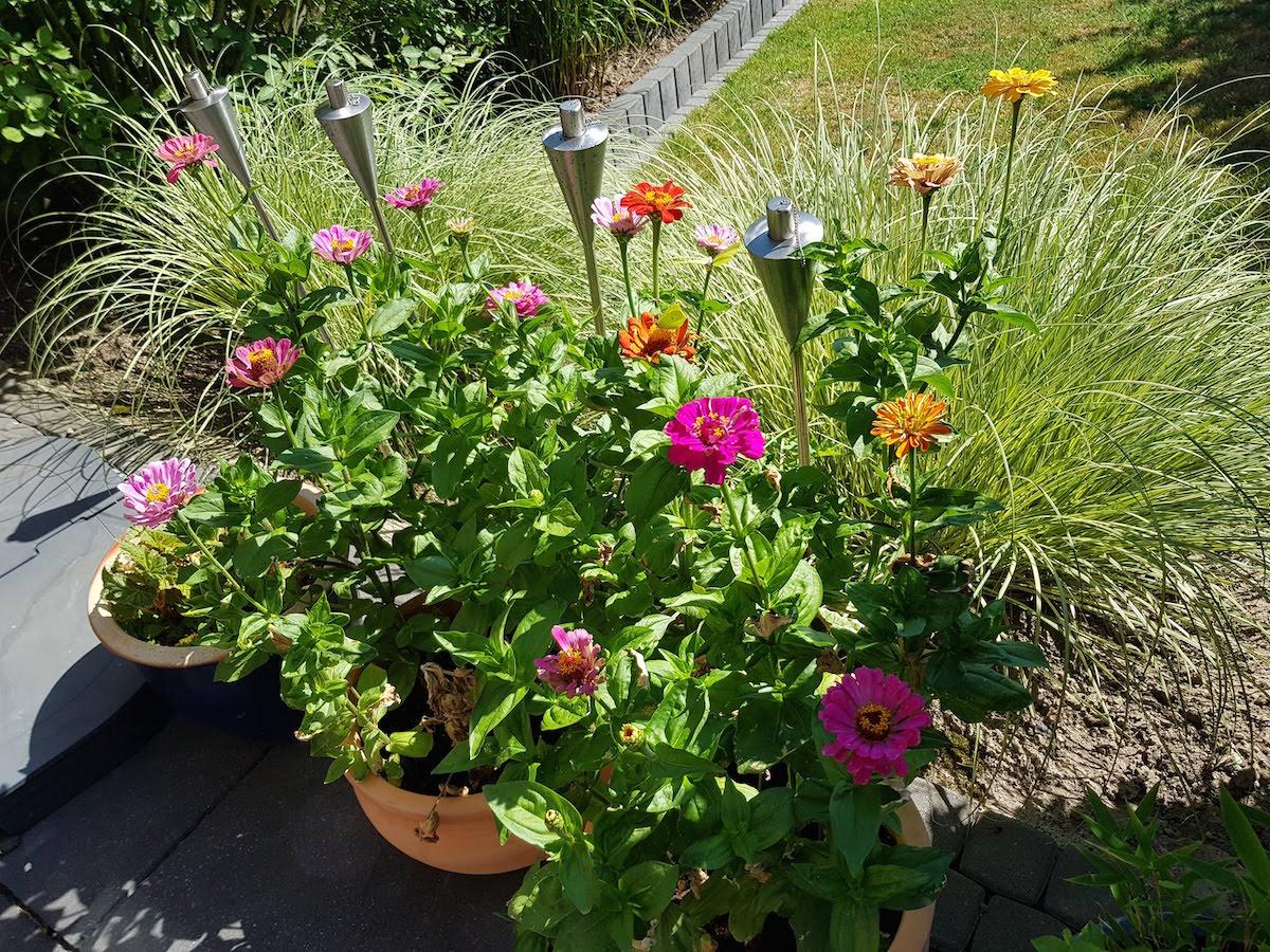 Blütenpracht in unserem Garten
