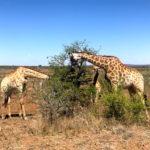 Gayurlaub in Südafrika - Tipps für schwule Reisen